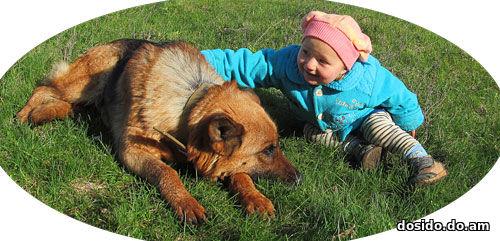 Немецкая овчарки с девочкой